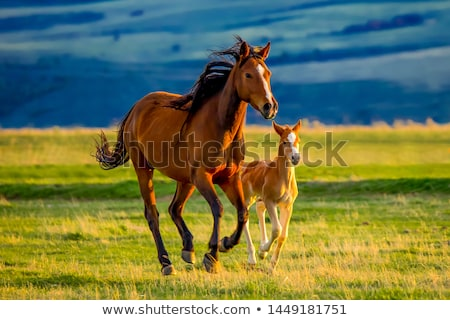 Mare and foal with brown white Stock photo © Yongkiet