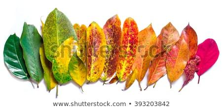 Canlı sonbahar yaprakları renkli sonbahar kırmızı Stok fotoğraf © Smileus