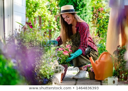 tuin · planten · patio · basilicum · peterselie - stockfoto © ozgur