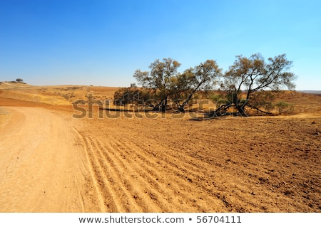 Lonely Road In The Negev Desert Stock photo © Zhukow