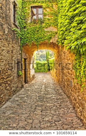 ivy covered wall on a narrow medieval street stock photo © g215