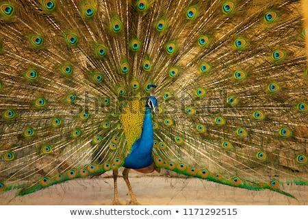 Hint resim renkli doğa kuş Stok fotoğraf © nialat