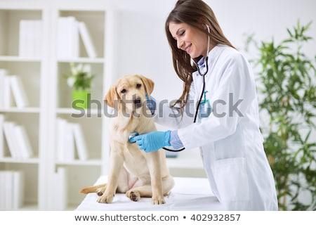 Zdjęcia stock: Uśmiechnięty · weterynarz · psa · medycznych · biuro