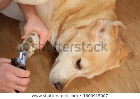 獣医 爪 白 女性 幸せ 医療 ストックフォト © wavebreak_media