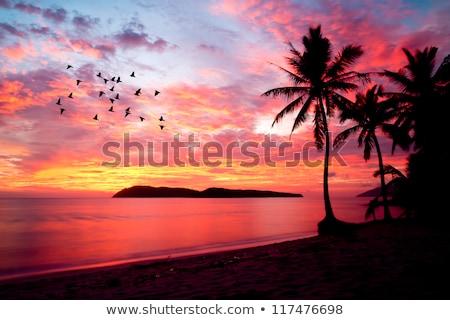 Naplemente narancs tengerpart háttér homok madarak Stock fotó © esatphotography