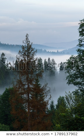 Stock photo: foggy morning