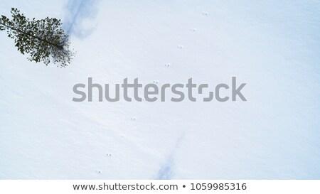 Iepure amprenta alb zăpadă câmp iarnă Imagine de stoc © meinzahn