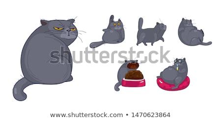 Fat gray cat Stock photo © bluering