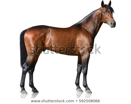 portrait of laughing brown horse stock photo © digoarpi