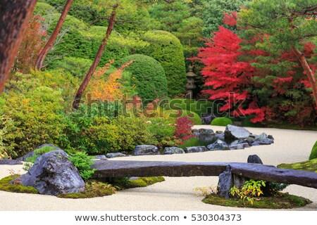 Japonés arce árbol otono 2016 jardín Foto stock © davidgn