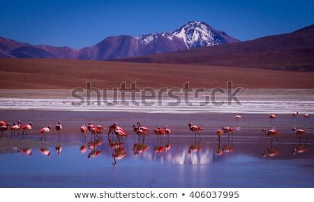 Hegy hó hegyek kék áll állatvilág Stock fotó © julianpetersphotos