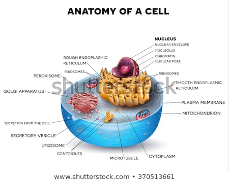 Stock photo: Cell structure