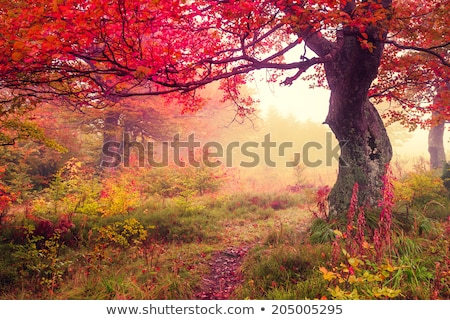 Fenséges színes erdő fák napos hegy Stock fotó © Leonidtit