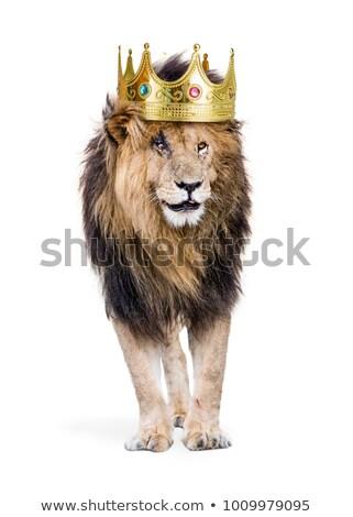 oroszlán · király · korona · vektor · felirat · illusztráció - stock fotó © bluering