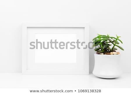 Branco quadro de imagem paisagem detalhado foto Foto stock © pakete