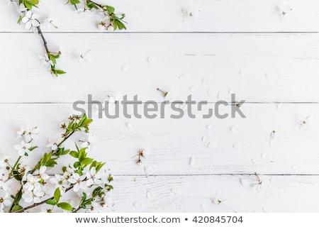Bloemen witte houten verschillend Pasen bloem Stockfoto © master1305