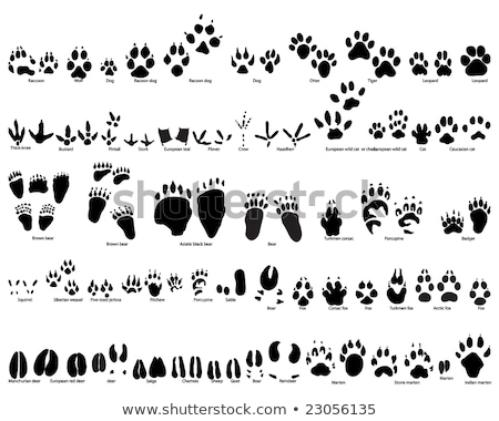 different kinds of bears on white background stock photo © bluering