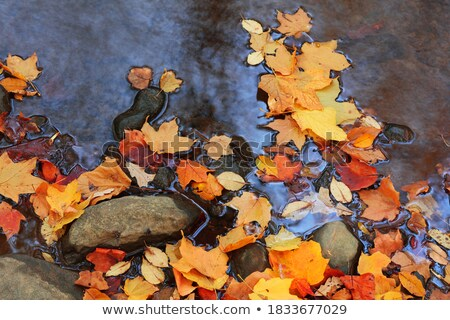 ősz · juharlevél · kő · citromsárga · természet · háttér - stock fotó © ankarb