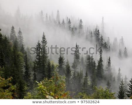 Misty forêt montagne lumière du soleil dramatique Photo stock © Leonidtit