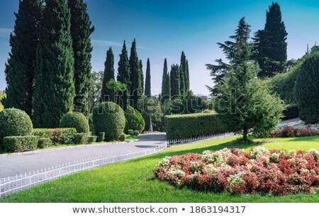 evergreen trees at seaside promenade stock photo © stevanovicigor