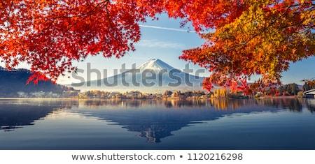 ősz · erdő · hegy · köd · tájkép · háttér - stock fotó © broker