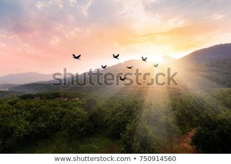 Kuş dağlar büyük uçan Sri Lanka ağaç Stok fotoğraf © Givaga