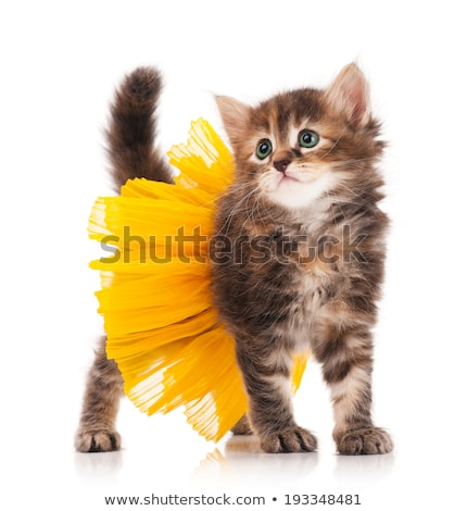 Cat Leap Exercise on White Background Stock photo © bluering
