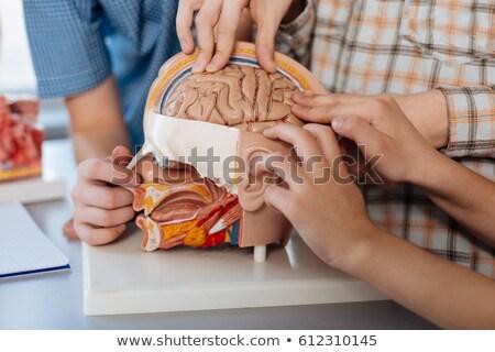 Crianças anatomia modelo estudar ilustração grupo Foto stock © lenm