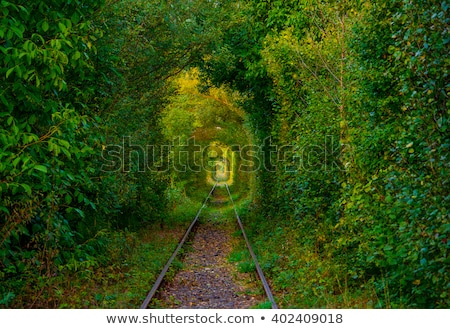 トンネル 愛 植生 成長した 鉄道 木 ストックフォト © taviphoto