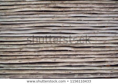 stick white wood trunk fence tropical Mayan wall Stock photo © lunamarina