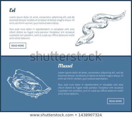 eel and mussel seafood set double color graphic stock photo © robuart