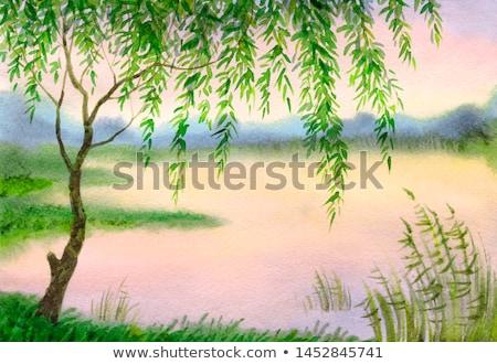 tó · fűzfa · csendes · ágak · érintés · víz - stock fotó © ustofre9
