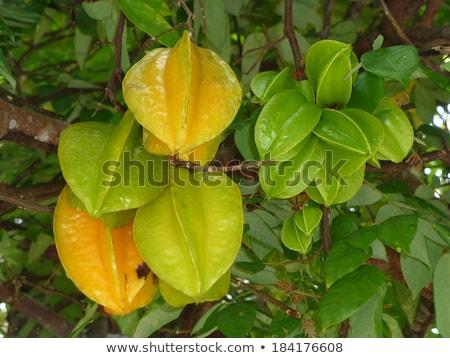 Carambola grows on a tree, Averrhoa carambola, Tropical fruit Stock photo © galitskaya