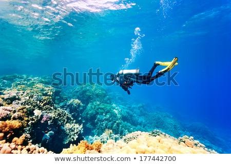 Férfi mélyvizi búvárkodás óceán illusztráció tenger háttér Stock fotó © colematt