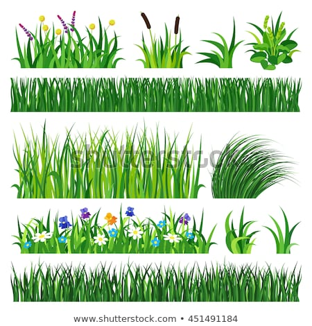 Erba verde crescita radici terra bianco erba Foto d'archivio © inxti