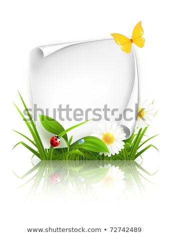 imagem · joaninha · sorrir · folha · verão · folhas - foto stock © bluering