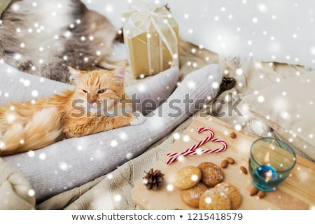 red cat lying on owner feet in bed at christmas Stock photo © dolgachov