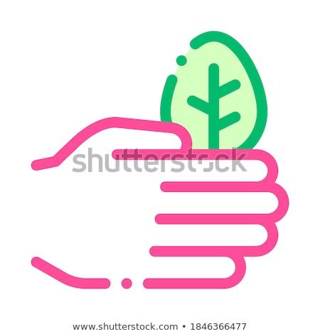 Kéz törődés fa levelek fa vektor Stock fotó © pikepicture