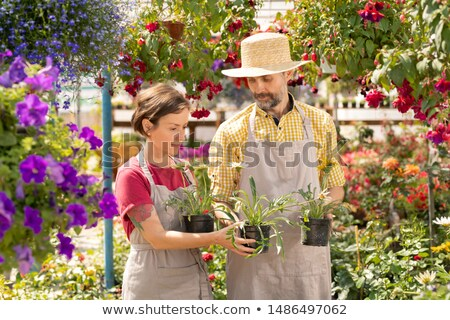 mature gardener showing colleague several new sorts of garden flowers in pots stock photo © pressmaster