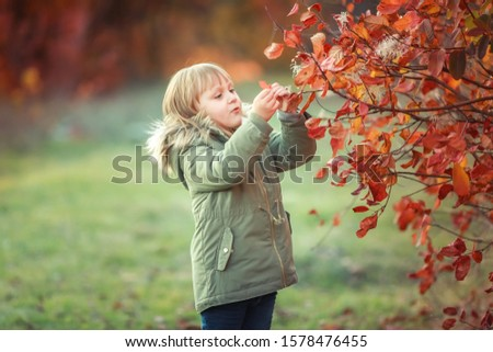 One little girl in autumn walks among the trees with fabulously colored yellow leaves Stock photo © ElenaBatkova
