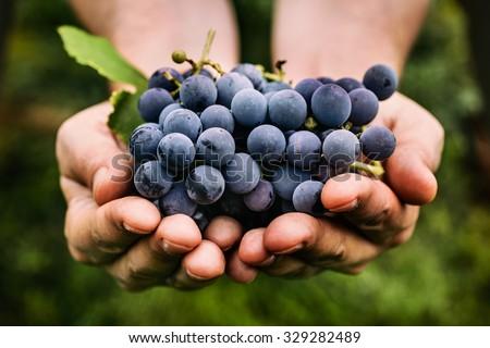 White Wine With Grape In Hand Stok fotoğraf © mythja