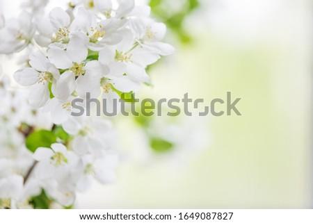 Beyaz çiçek açan ağaç Stok fotoğraf © Epitavi