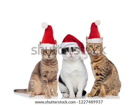 adorable black and white metis cat with santa cap sitting Stock photo © feedough