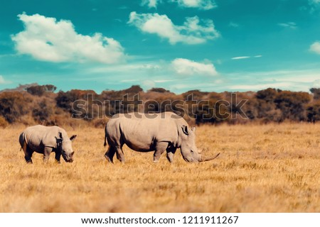 White Rhinoceros Masai Mara Reserve Kenya Africa Zdjęcia stock © Artush
