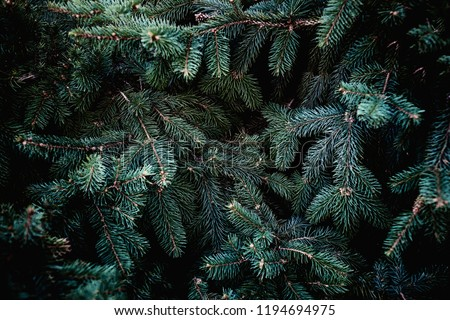 Fir-needle tree branches composition as a background texture Stock photo © fotoscool