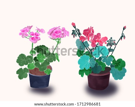 watercolor potted flowers Set of isolated two geraniums Stock photo © Margolana