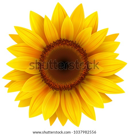 Sunflower Stock photo © Kurhan