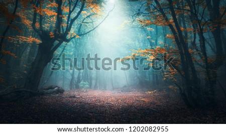 лес пейзаж дороги озеро фонтан дерево Сток-фото © OleksandrO