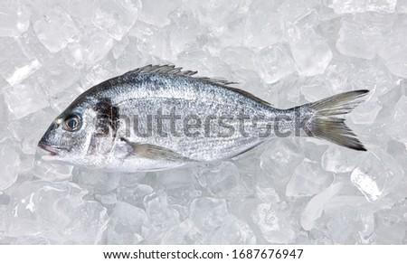 Fresco peixe gelo mercado Madri Foto stock © meinzahn