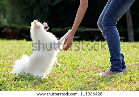 állatorvos kis kutya izolált fehér kéz orvos Stock fotó © fantazista